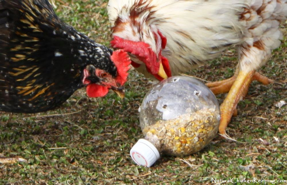 http://naturalchickenkeeping.blogspot.com/2013/12/cheep-n-easy-diy-chicken-boredom-buster.html
