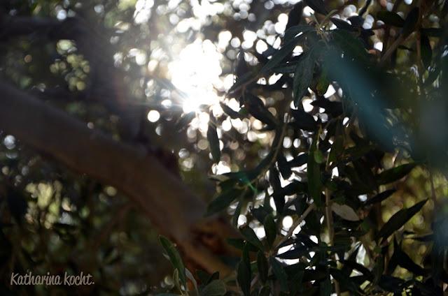 Olivenbaum Sonne