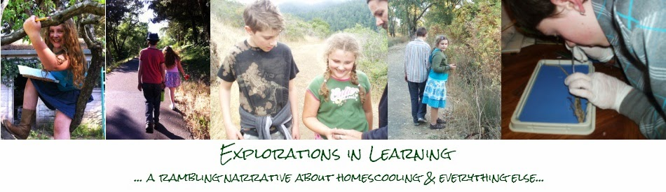 Explorations in Learning