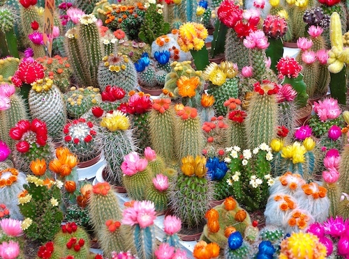 Suggestions Online Images of Indoor Cactus Garden