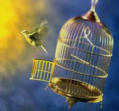 Burung Kicau Yang Lepas