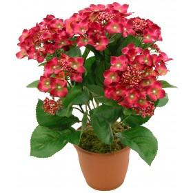 Flowerpot - Como cuidar las hortensias en maceta ...