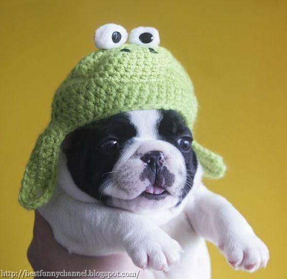 Funny puppy in a green cap