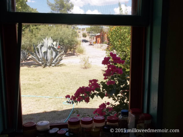 looking out kitchen window, Chinati Hot Springs, Ruidosa, Texas