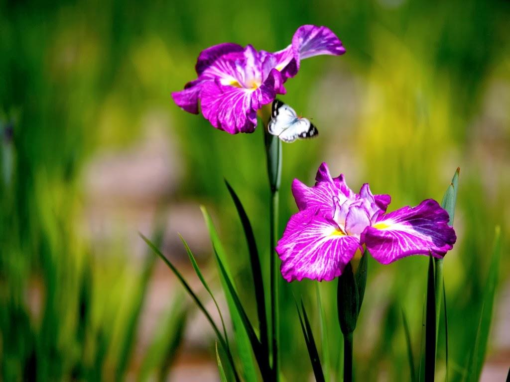 """<img src=""""http://2.bp.blogspot.com/-N6540bts7EA/UtrsNDnnQ-I/AAAAAAAAI6w/PuoN2ibEI2Y/s1600/lovely-butterfly.jpeg"""" alt=""""butterfly couple"""" />"""