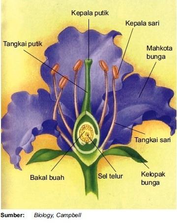 Struktur fungsi gambar dan bagian bunga bagian bagian bunga ccuart Gallery