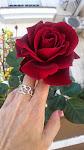 Otra de mis rosas