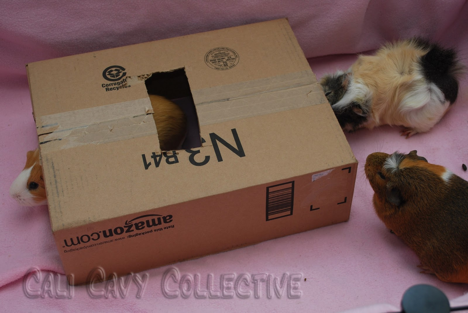 ... all things guinea pig: DIY guinea pig toy: cardboard box hideaway