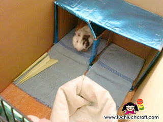 how to make house for guinea pig