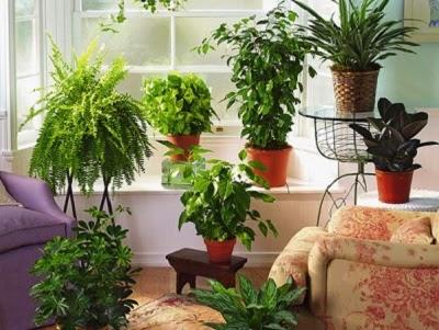 cara menanam tanaman hias di dalam pot, tips menanam tanaman hias indoor