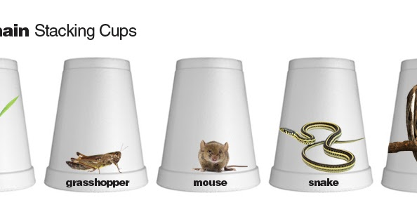 E Is For Explore Food Chain Stacking Cups