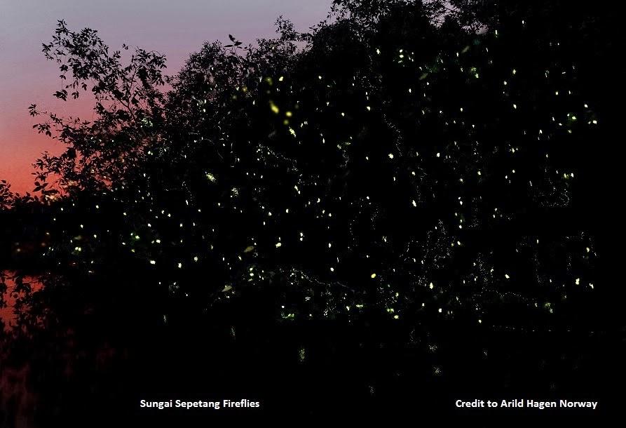 KUALA SEPETANG ECO TOURISM Matang Mangrove Forest Reserve ...