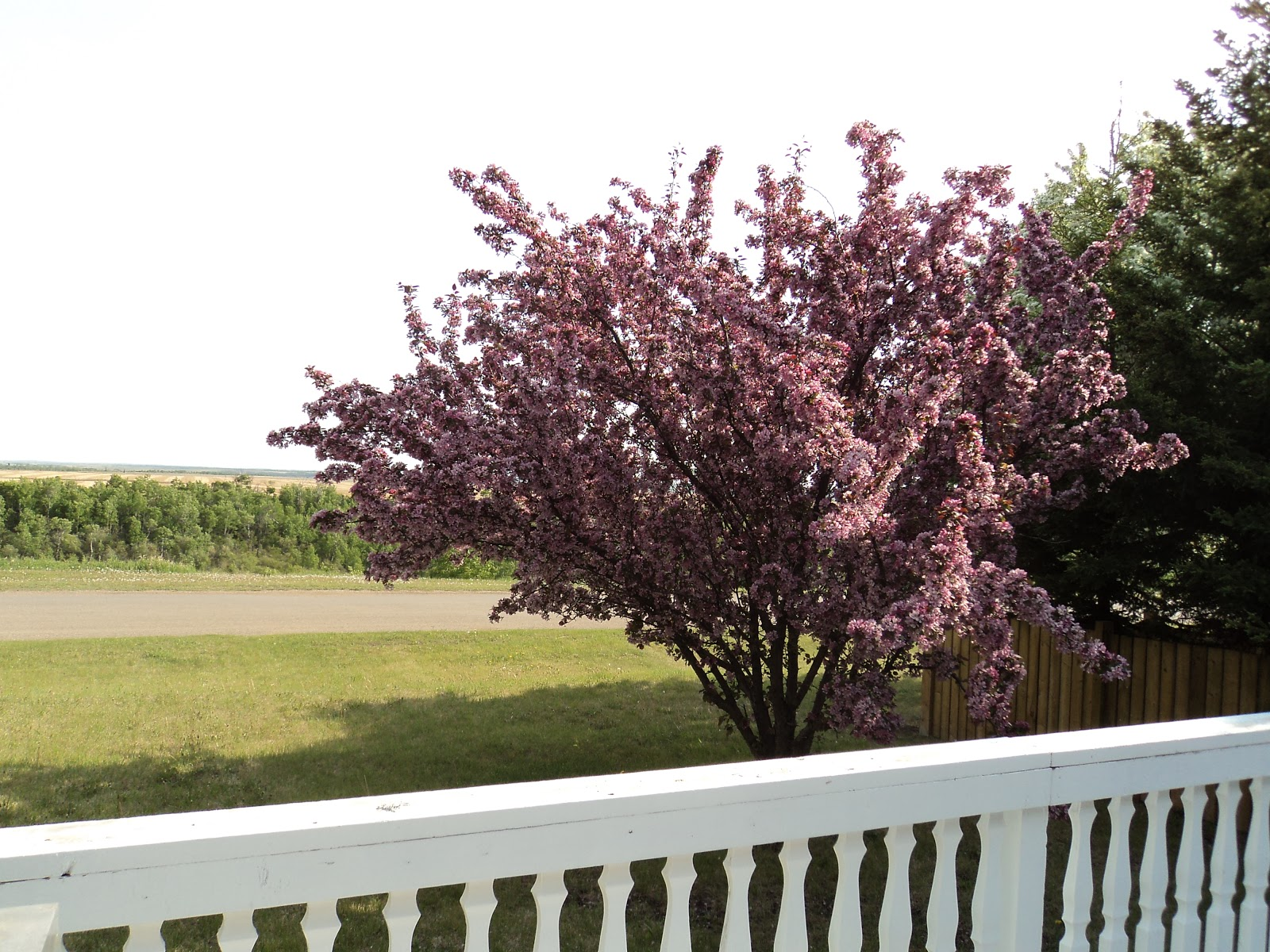 Southeast Of 33 Our Flowering Crabapple Tree