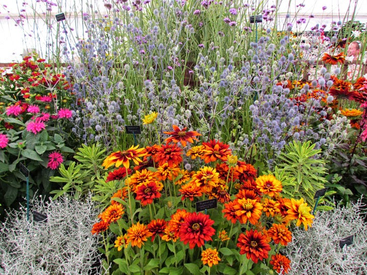 floral displays RHS Tatton