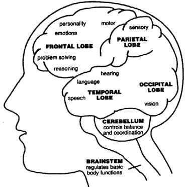 Brain Functions2