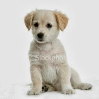 Gunggung Koleksi Gambar Anjing Yang Lucu