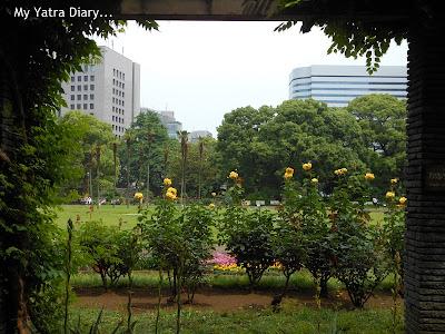 Flower and architecture at Hibiya Garden - Tokyo, Japan