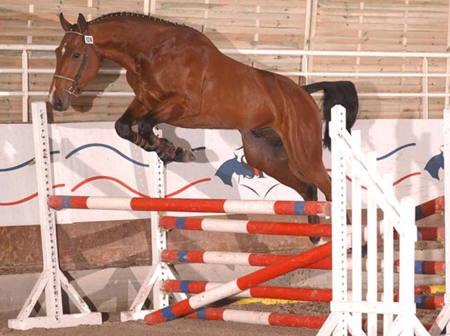 A caballo silla franc s - Caballo silla frances ...