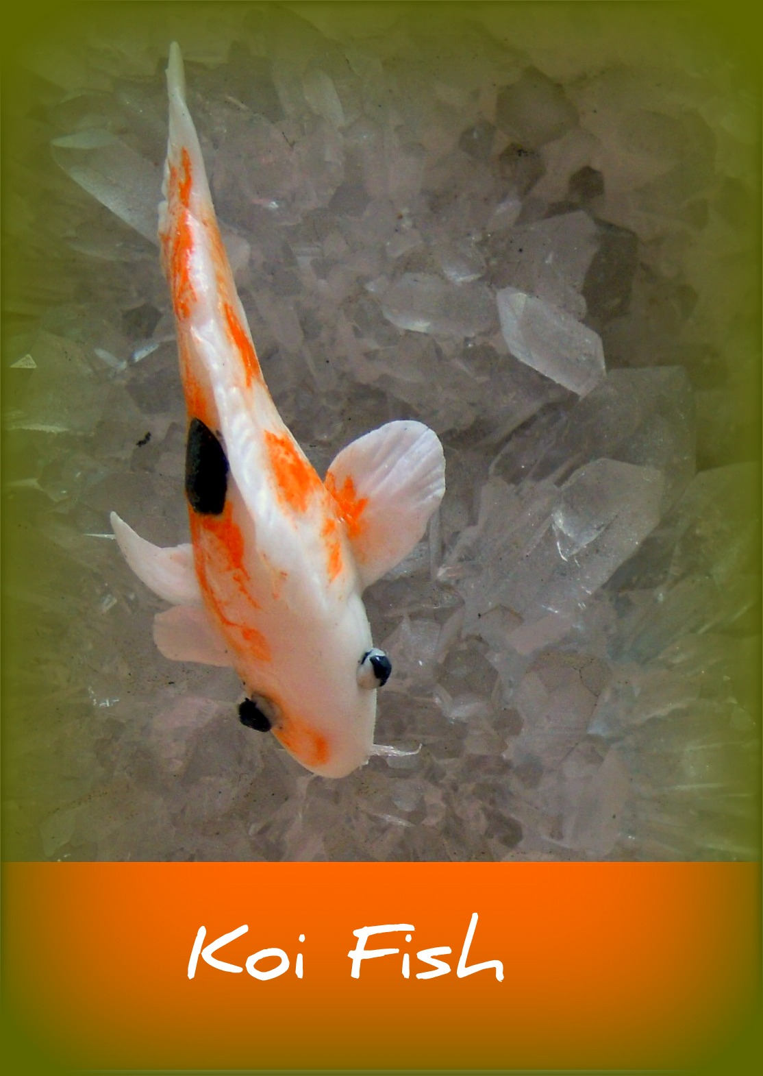 Wellajoy 39 s miniature koi fish with videos for Mini koi fish