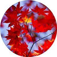Destinos-viajar-otoño