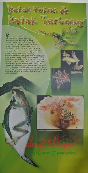 blog along25 kitaran hidup katak kodok jenis katak kodok muzium presint15 alam warisan putrajaya