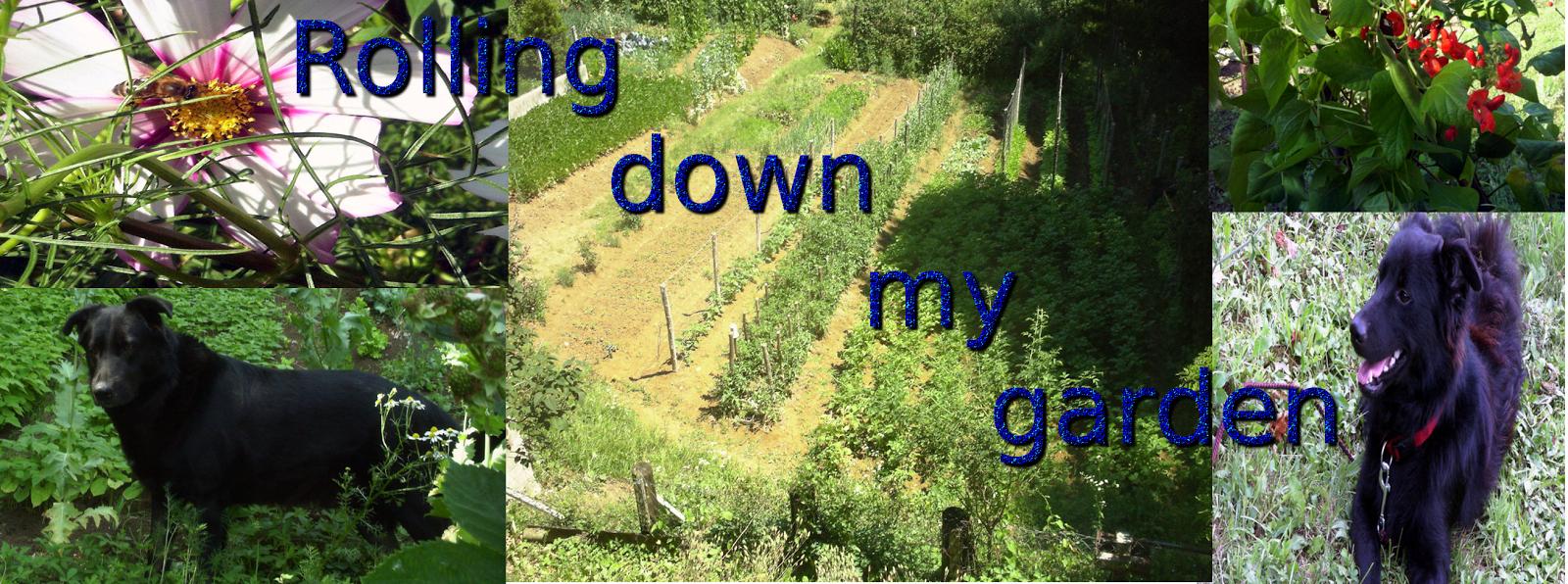 Rolling down my garden