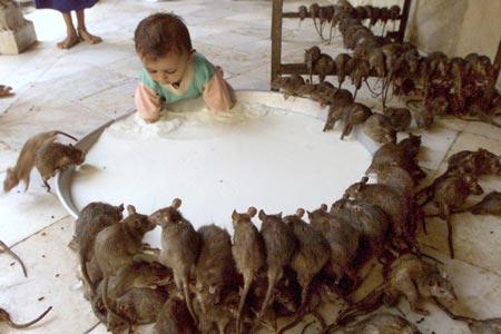 Insiden Bayi dalam Inkubator Digigit Tikus