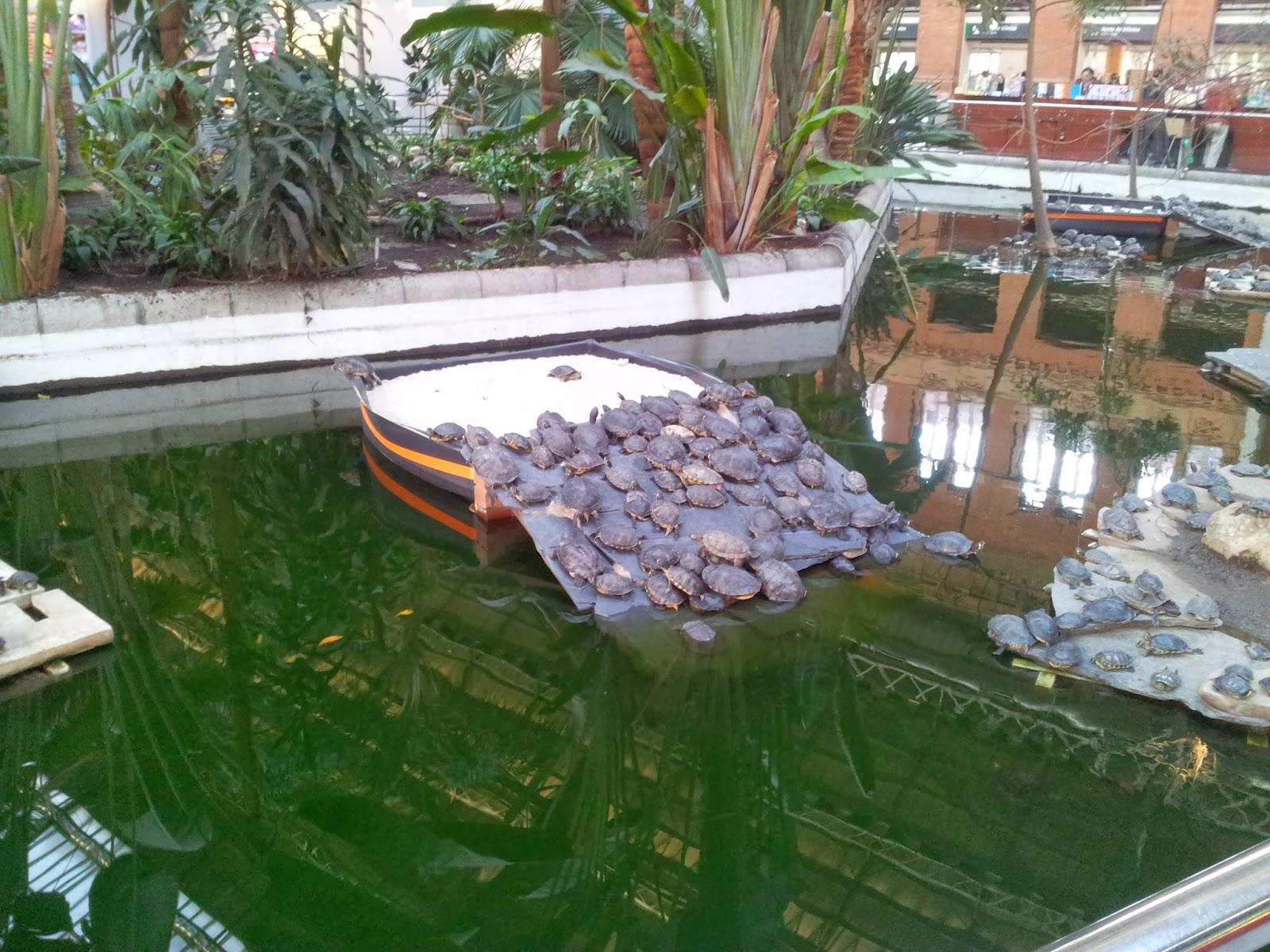 Mil maneras de madrid 300 tortugas 39 colonizan 39 ya el - Estanques para tortugas de agua ...