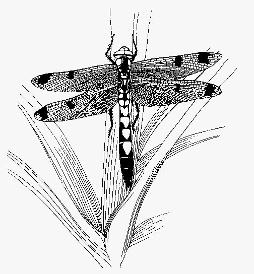 Cute Dragonfly Coloring Pages
