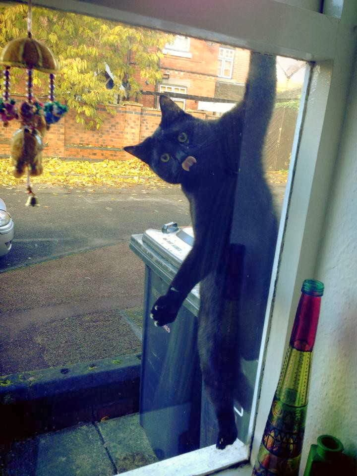 Funny cats - part 80 (40 pics + 10 gifs), cat on window