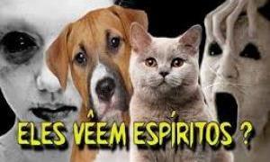 Sobrenatural: Os animais podem ver espíritos?