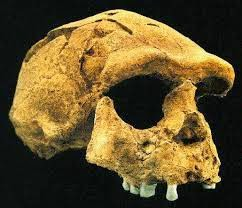 Sejarah Manusia Purba Dan Jenis-Jenisnya