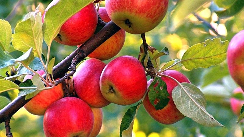 Яблочный сок в домашних условиях - Ресторан дома