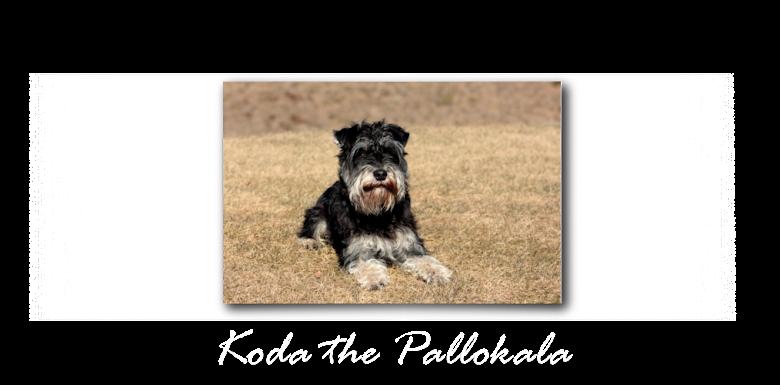 Koda the Pallokala