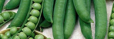 Recettes: Légumes-Soupe de petits pois à la menthe