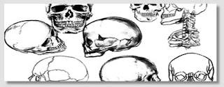 Skull Brushes 3