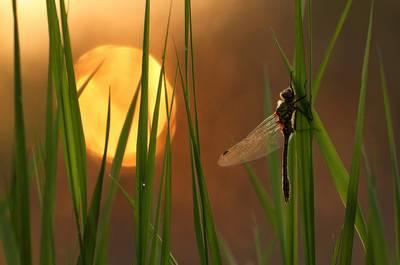 Dragon Fly & Sun