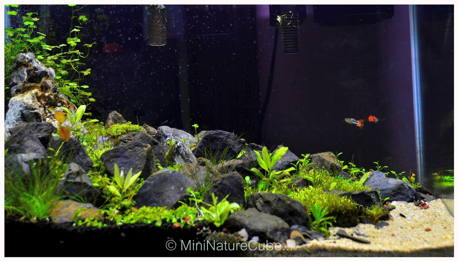 Photo Shoot Of My New Iwagumi Planted Aquarium The Art Of Planted Aquarium