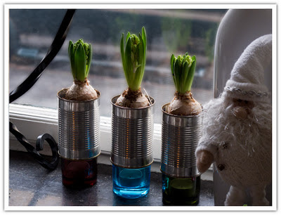 Hyacinter i konservburkar, bild 2