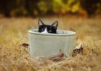 Cat in the Pot 5