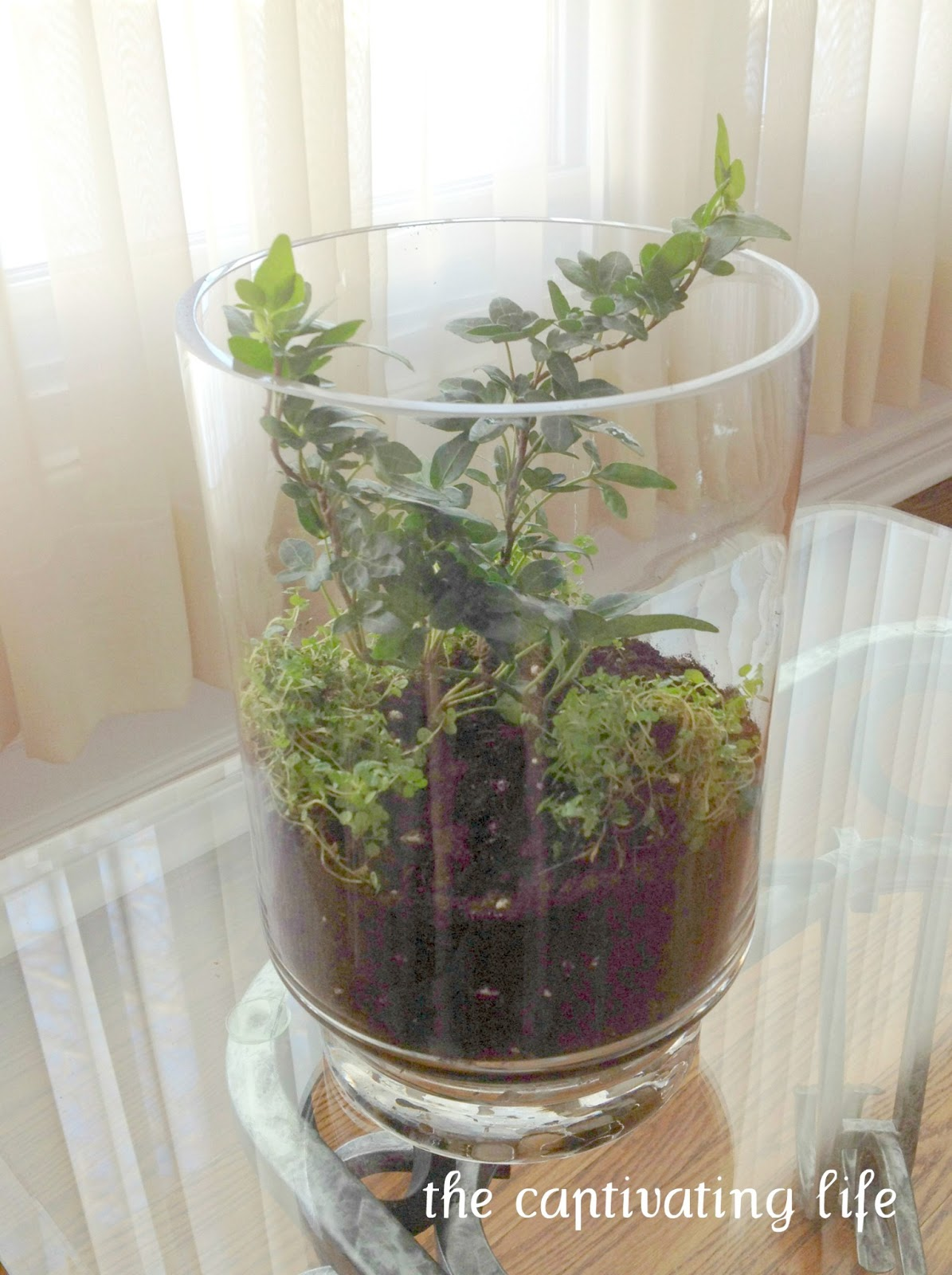 Indoor Fruit Plants Posted by S. @ The Captivating Life at 5:00 p.m.