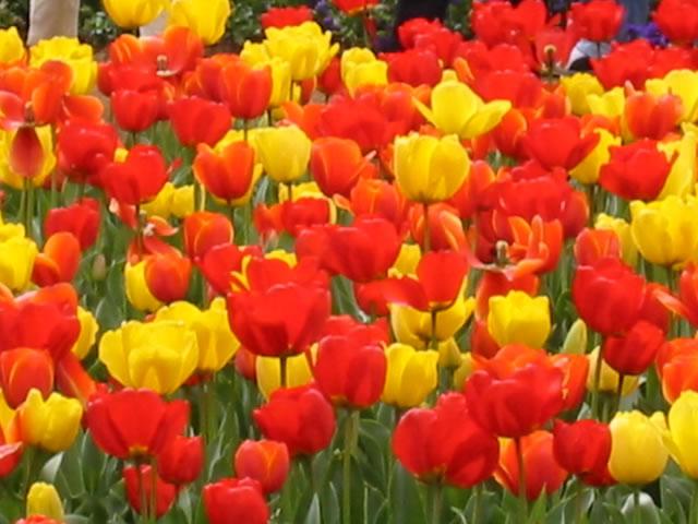 All About me And kinder garten Daftar bunga tercantik di