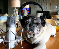 picture of bulldog with headphones and a microphone