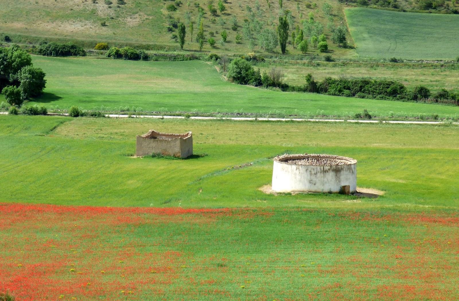 Cantos de aves y mariposas en Urueña | Por montes y riberas