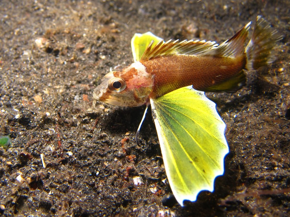 Name these fish for Wings fish