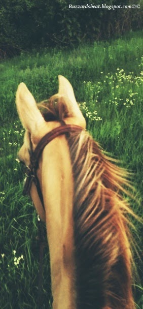 riding through the pasture