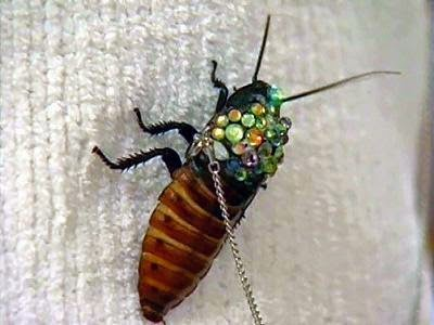 Madagascar Hissing Cockroach Brooches