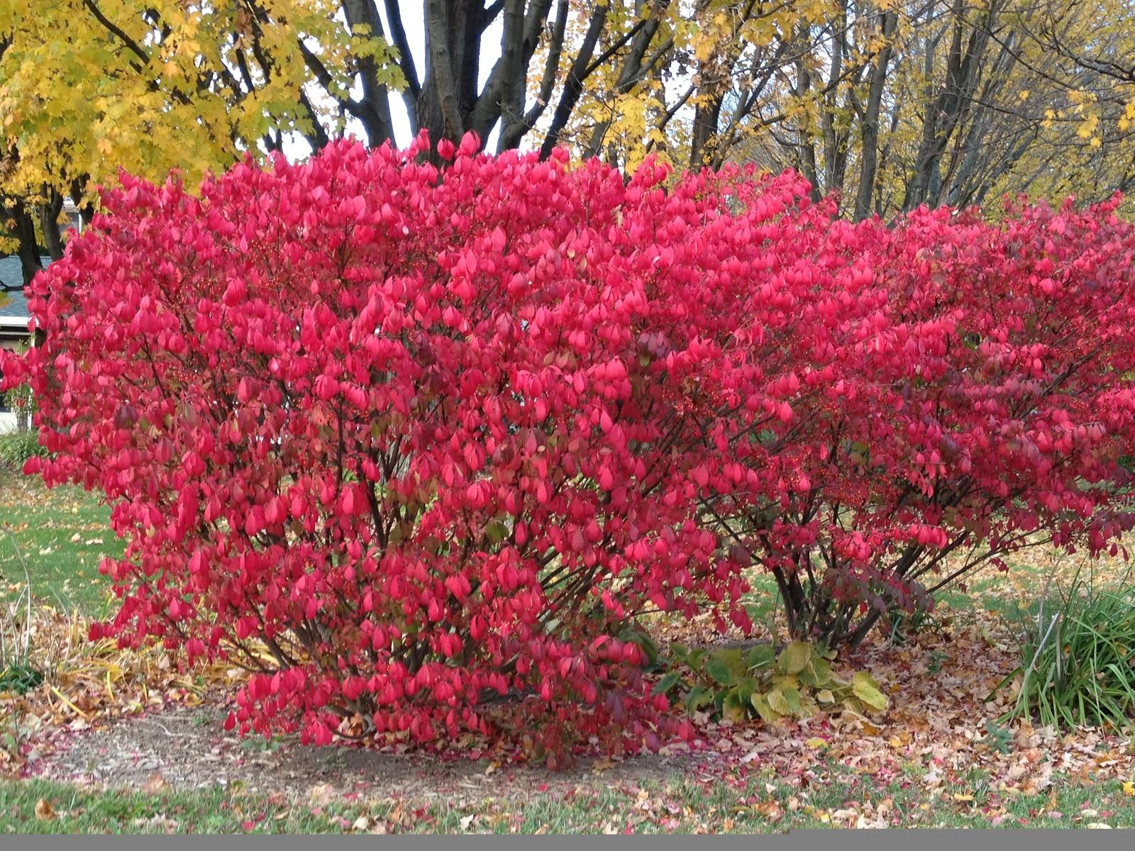 Red Bush Net Worth