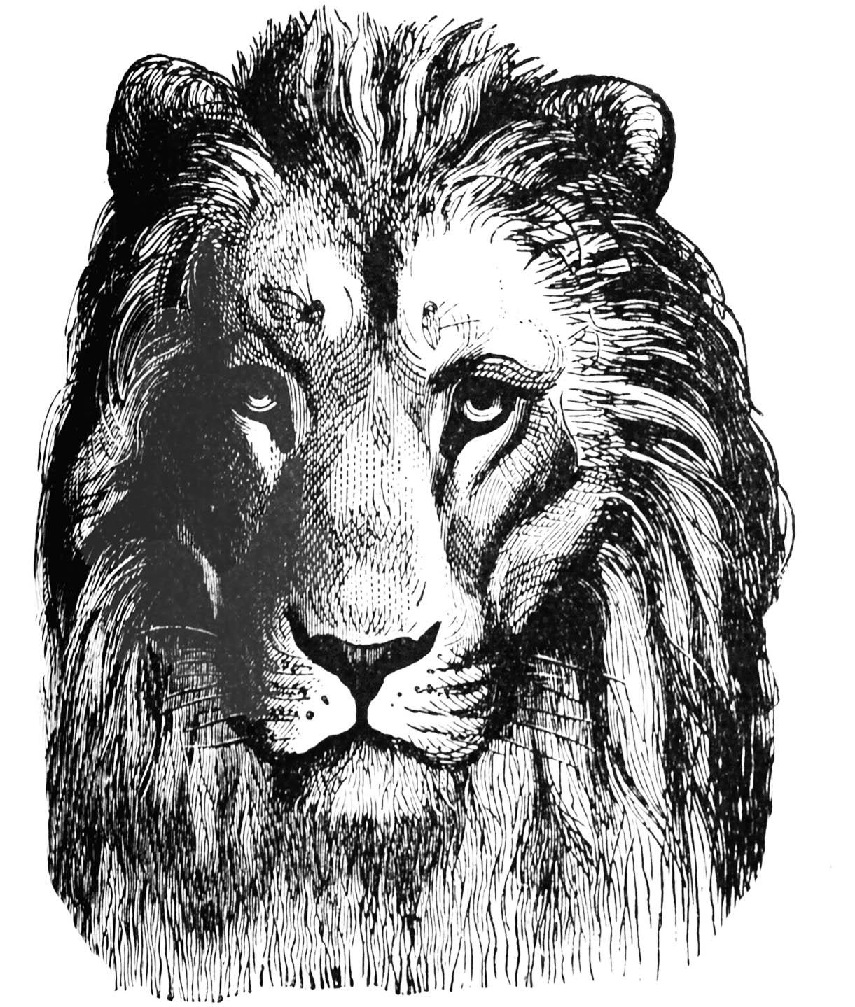 http://2.bp.blogspot.com/-NB3pthoEs6E/U6mFSNL6blI/AAAAAAAAOSY/bD-AjC1o9wQ/s1600/01+free+digital+stamp_lion+head+clip+art.jpg
