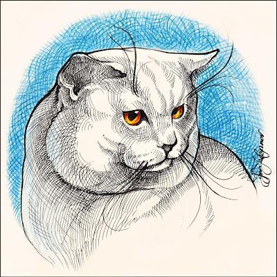 dessin chat blanc